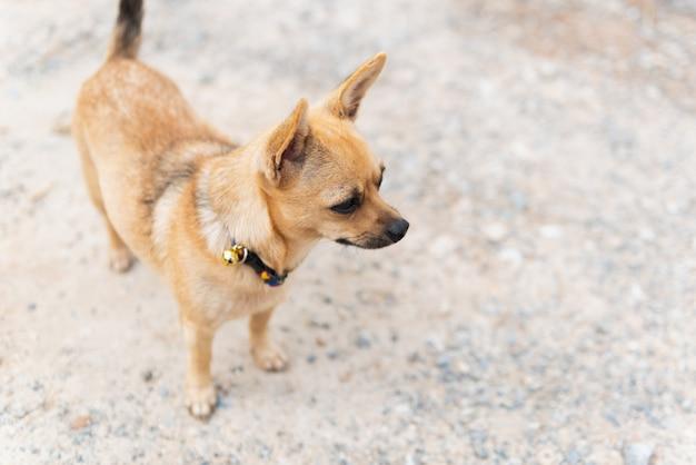 Petit chien debout à côté de la rue