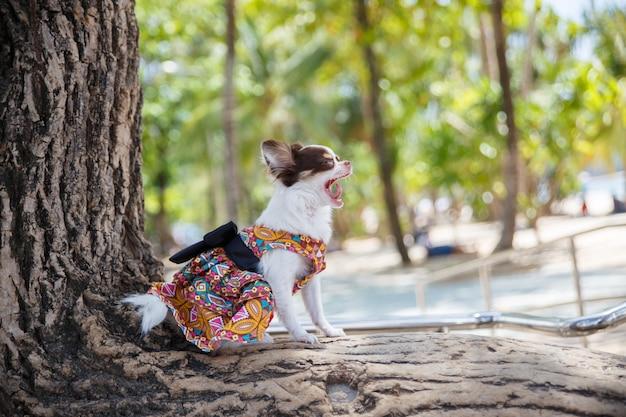 Un petit chien debout et jouant sur le grand arbre avec sur la plage de la province de phuket en thaïlande.