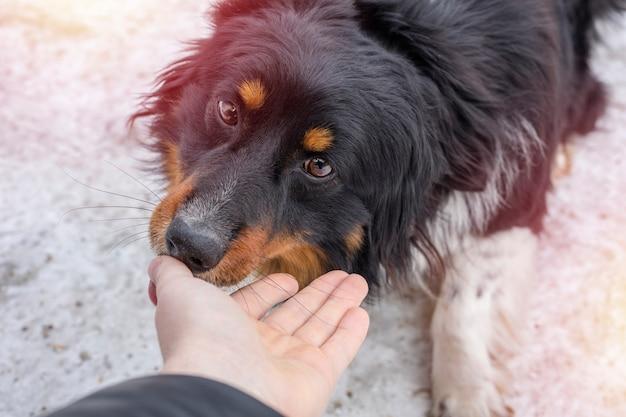 Un petit chien errant lèche une main humaine dans la rue