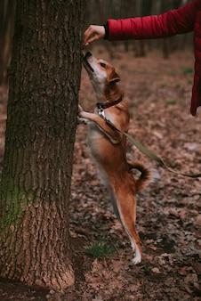Petit chien de gingembre en forêt