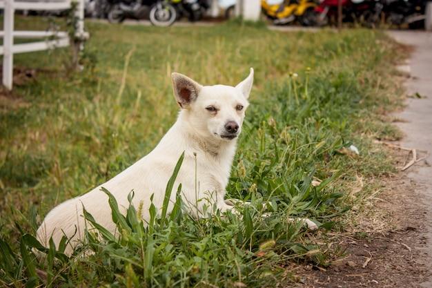 Petit chien intention de jouer intrigué entre l'herbe fraîche de la ferme