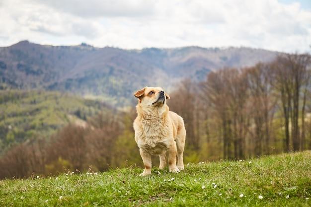 Petit chien lors d'une randonnée en montagne