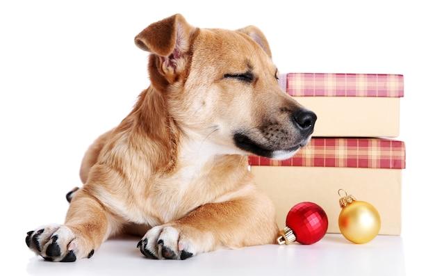 Petit chien mignon drôle avec des cadeaux et des jouets de noël, isolé sur blanc