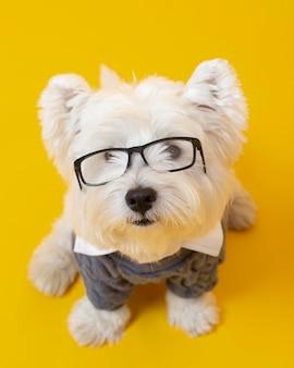 Petit chien mignon se faisant passer pour un homme d'affaires