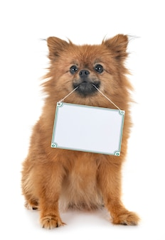 Petit chien et pension