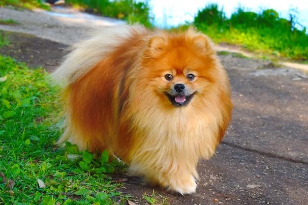 Petit chien qui court dans une rue
