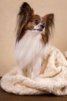 Un petit chien se prélasse dans un gros pull en maille