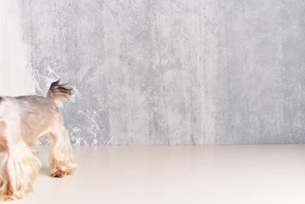 Petit chien toilettage domestique fond isolé