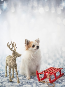 Petit chihuahua devant l'hiver