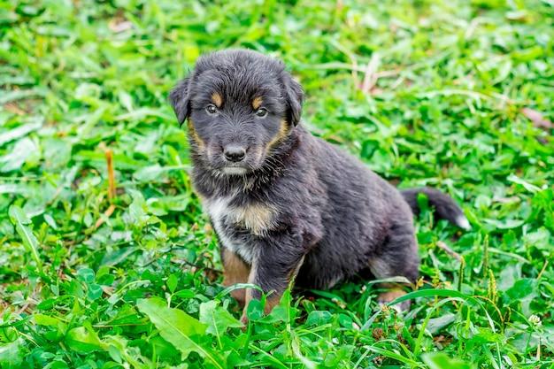Un petit chiot noir est assis sur une herbe verte