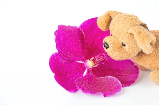Un petit chiot sent de belles fleurs d'orchidées.
