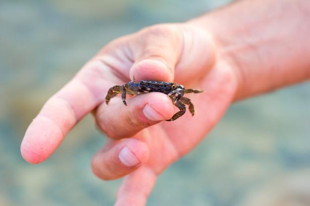 Petit crabe dans les doigts des hommes, mise au point sélective