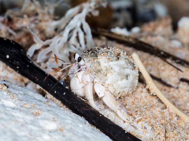 Petit crabe ermite sur la plage