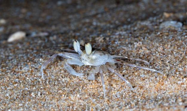 Petit crabe sur la plage