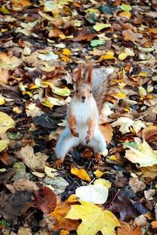 Un petit écureuil se dresse sur ses pattes de derrière parmi les feuilles du parc.