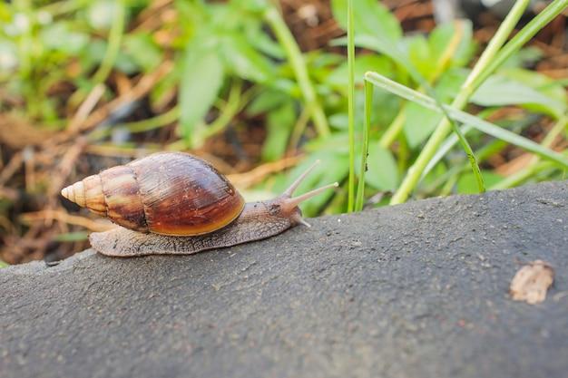 Petit escargot au corps sombre glissant sur le bois un jour de pluie