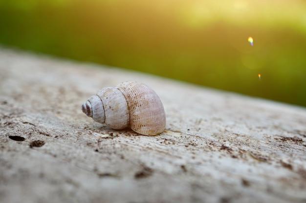 Petit escargot au sol dans la nature