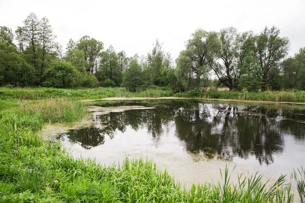 Petit étang sauvage