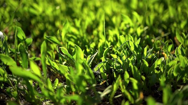 Un petit feuillage vert pousse sur le sol