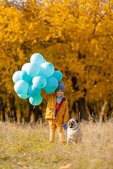 Un petit garçon avec une brassée de ballons et un chien carlin se promène dans le parc en automne. arbres jaunes et boules bleues. enfant élégant. enfance heureuse.