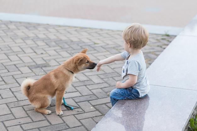 Petit garçon et chiot shiba inu rouge jouant à l'extérieur en été, bébé nourrit son chien avec de la viande