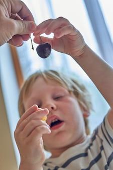 Un petit garçon regarde les cerises devant son visage. l'enfant regarde les baies