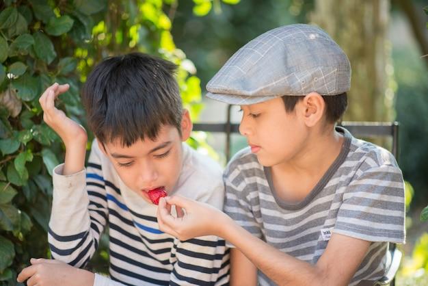 Petit garçon de soeur mangeant et se battant tout en mangeant des fraises