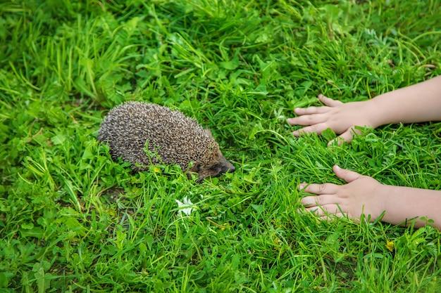 Petit hérisson dans la nature. animaux.
