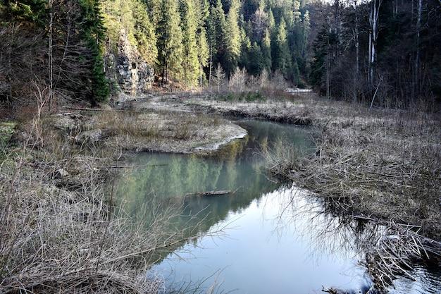 Petit lac dans la forêt