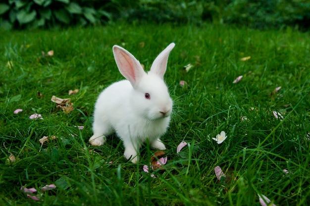 Petit lapin blanc assis dans l'herbe verte concept de pâques