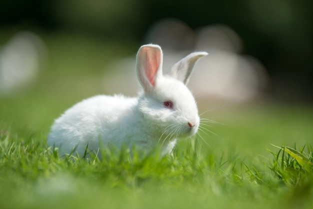 Petit lapin blanc sur l'herbe verte en journée d'été