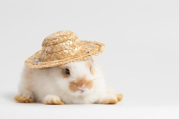 Petit lapin blanc pose avec chapeau de paille sur fond blanc isolé au studio.