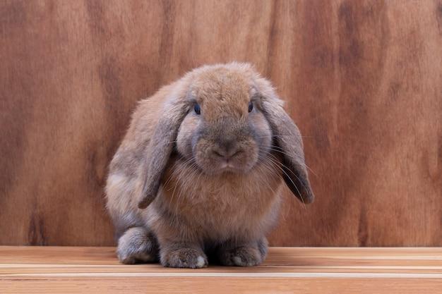 Petit lapin brun sur fond en bois marron au studio
