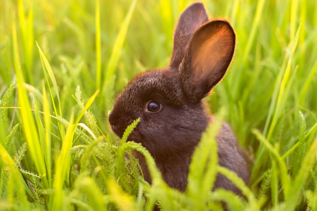 Petit lapin dans l'herbe