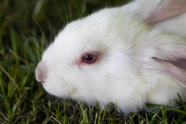Petit lapin drôle courir sur le terrain en été