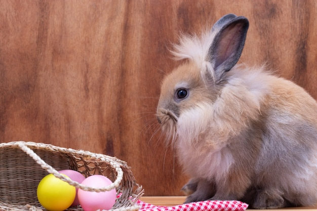 Petit lapin marron avec panier d'oeufs assis sur un fond en bois gris avec des oeufs au studio