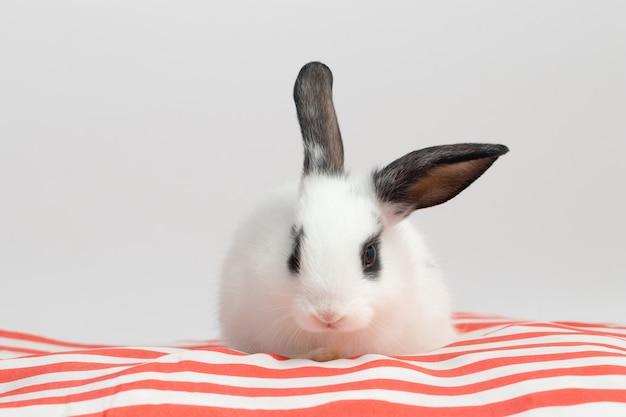 Petit lapin timide assis sur un coussin rouge avec un fond blanc isolé au studio.