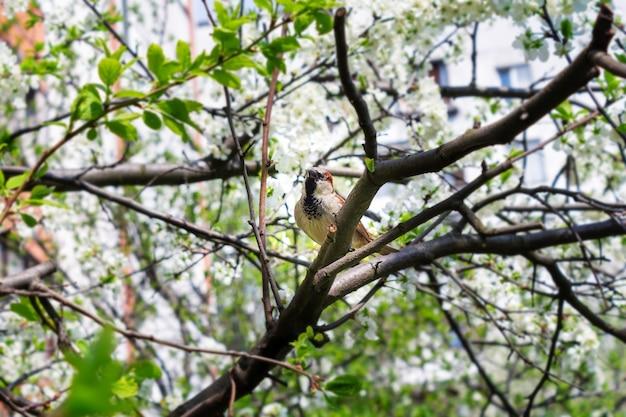 Petit Moineau Gris Dans Les Branches Des Oiseaux De La Ville Des Arbres Libre Photo Premium