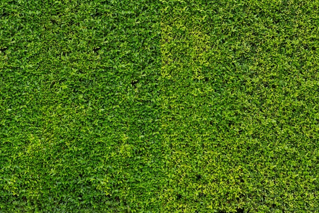 Petit mur de feuilles vertes pour le fond