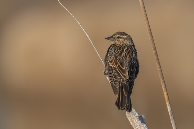 Petit oiseau assis sur une branche