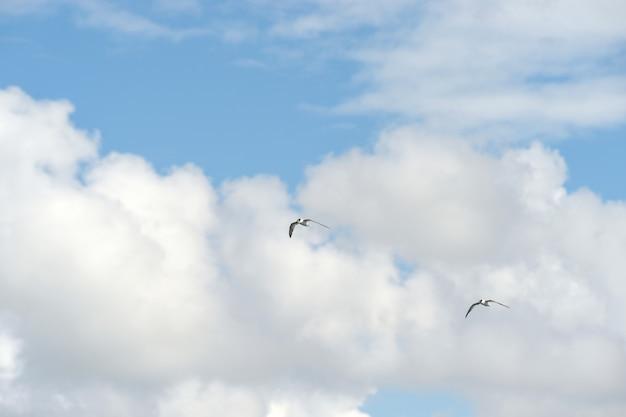 Petit oiseau sur ciel