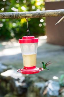 Petit oiseau colibri au long bec volant près de la mangeoire ou du bol à boire avec une abeille ensoleillée en plein air sur fond naturel