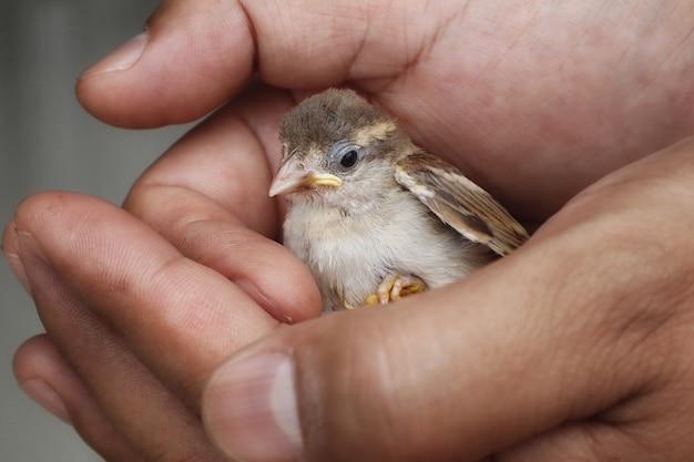 Petit oiseau dans la main