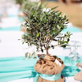 Petit olivier. décoration de mariage.