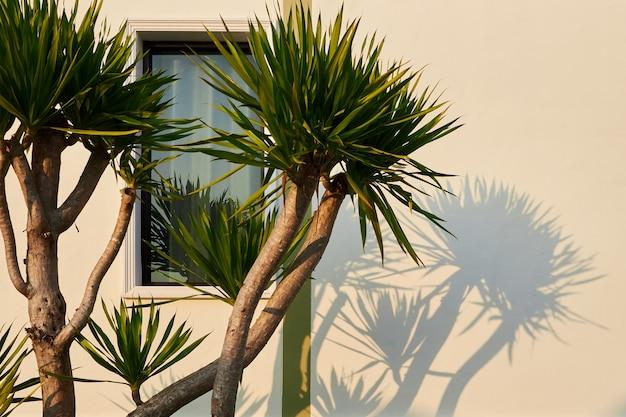Un petit palmier projette une ombre sur le mur de la maison et la fenêtre