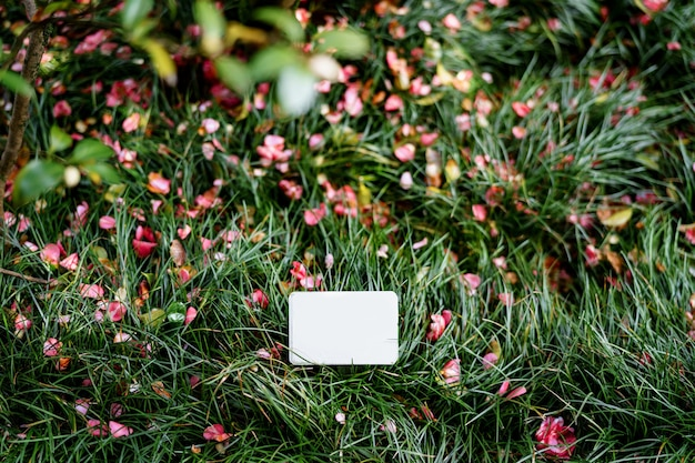 Petit panneau vierge se dresse sur une pelouse verte en fleurs