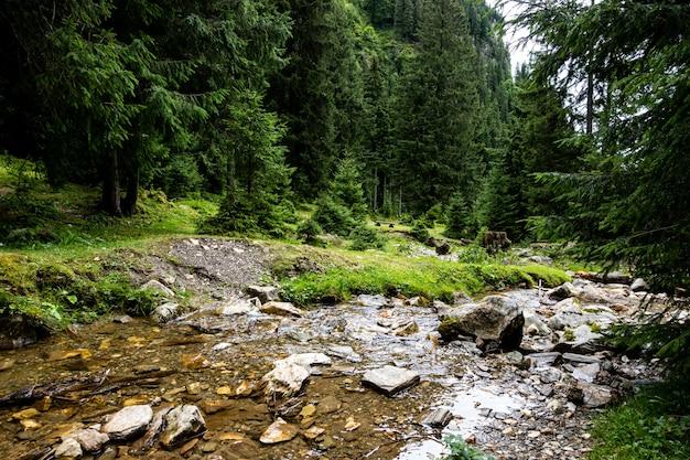 Petit paysage fluvial en forêt, vue panoramique.