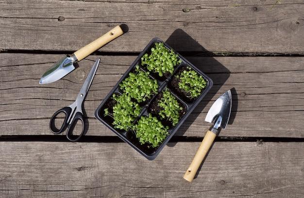 Petit Plant De Tabac Vert Dans Des Pots En Plastique Et Une Pelle En Acier, Paire De Ciseaux Sur Fond De Bois Rustique. Photo Premium