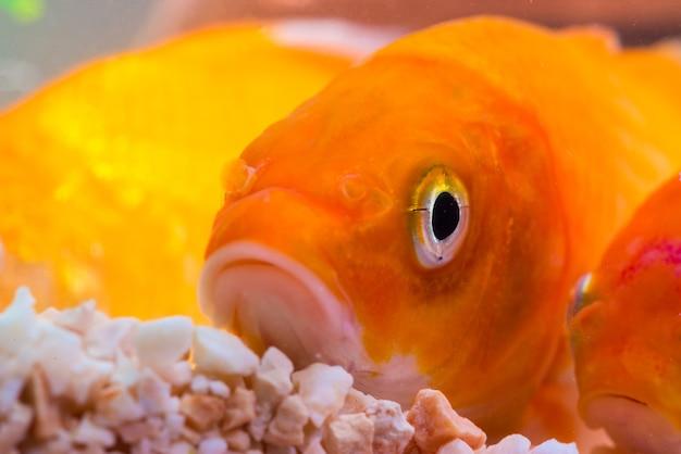 Petit poisson dans un aquarium ou un aquarium