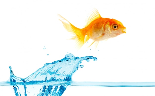Petit poisson d'or saute hors de l'eau.